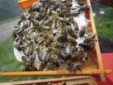 Bienenzucht am Wechsel
