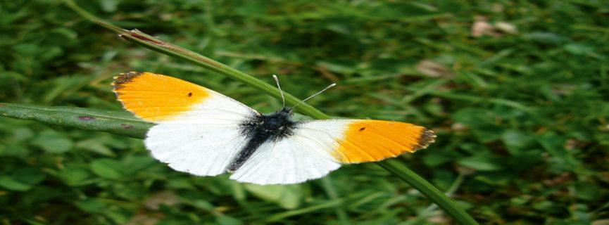Schmetterlinge im Garten