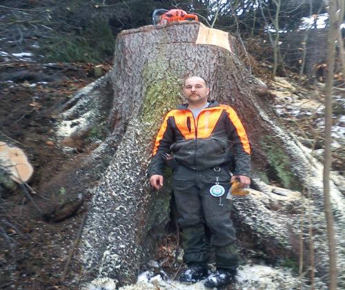 Schonendes Holzernten…
