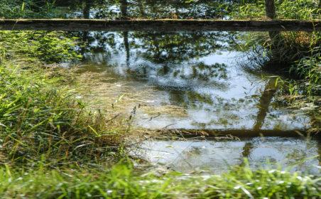 Der Wechsel und das Wasser