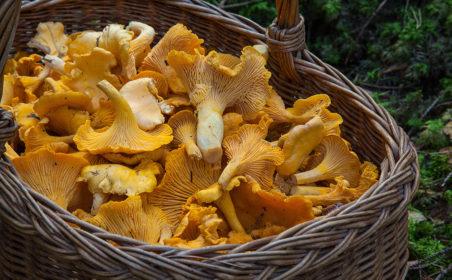 Pilze sammeln und verarbeiten