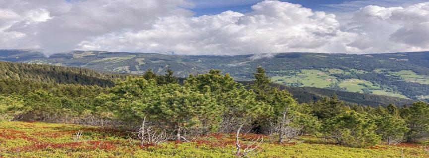 Einblicke in  einen Forstbetrieb